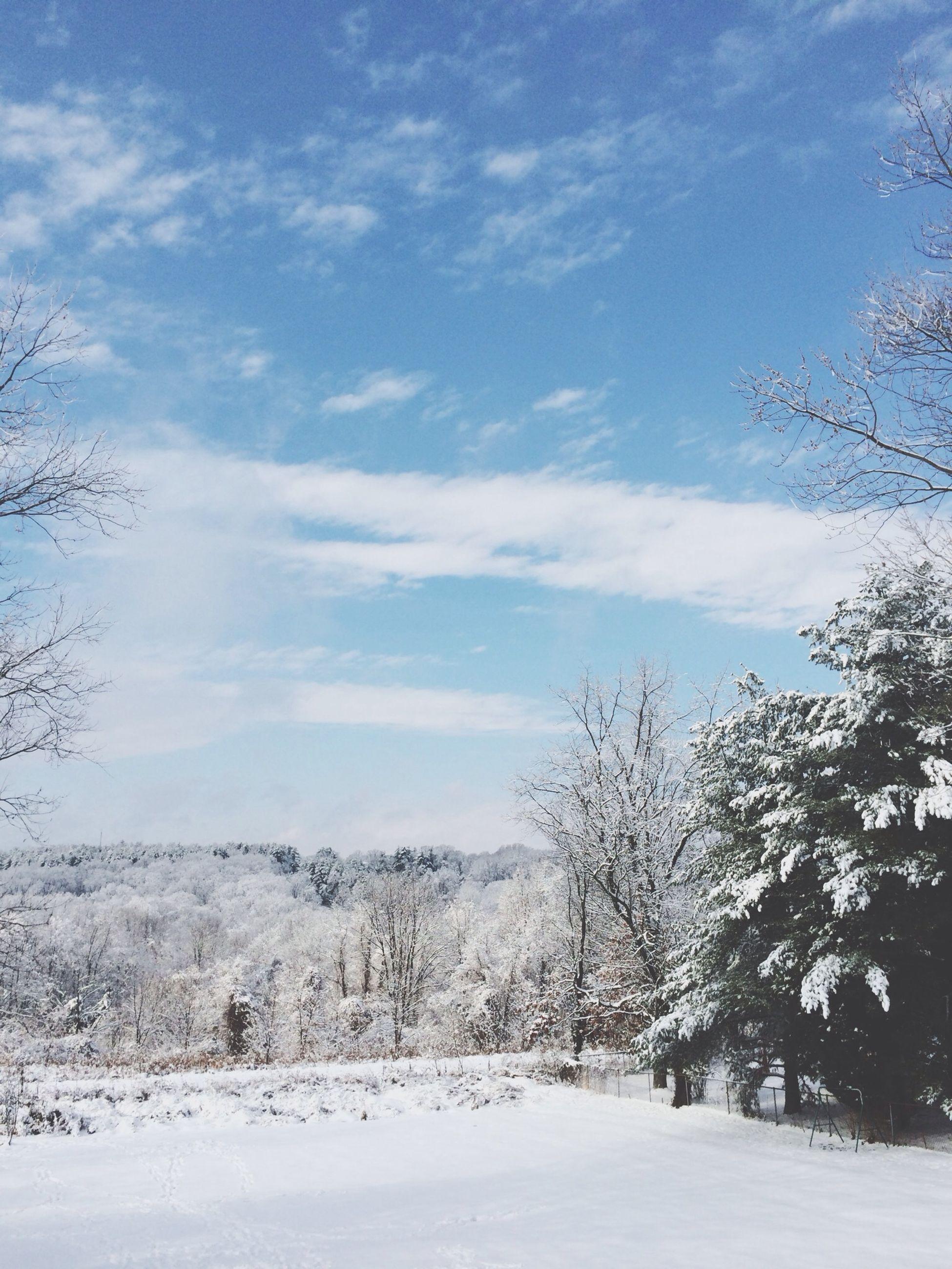 snow, winter, cold temperature, season, weather, tree, tranquility, tranquil scene, landscape, sky, covering, beauty in nature, scenics, nature, white color, field, frozen, bare tree, covered, non-urban scene