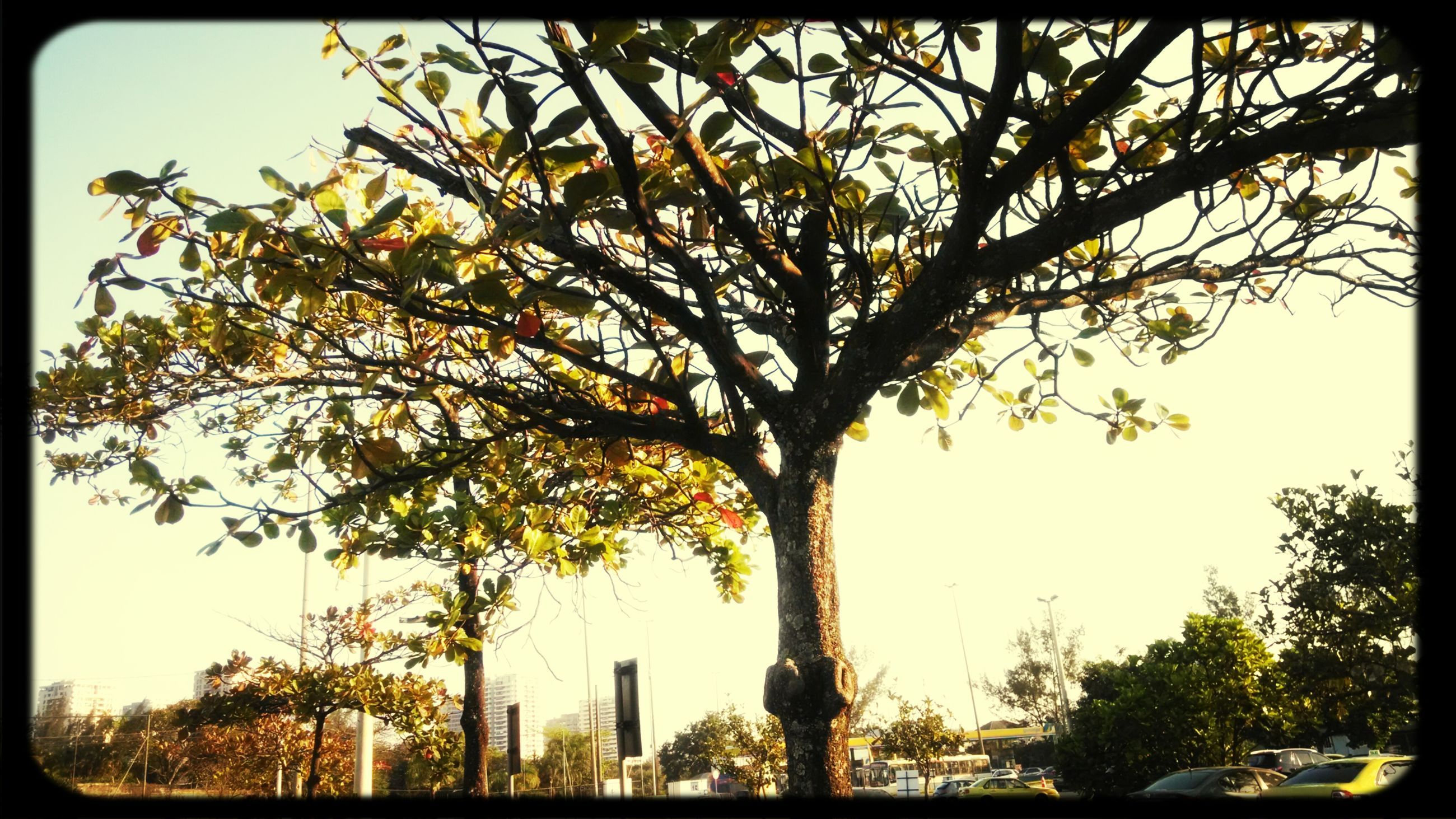 transfer print, tree, auto post production filter, built structure, architecture, low angle view, building exterior, branch, growth, clear sky, city, day, sky, tower, tree trunk, outdoors, tall - high, no people, bare tree, nature