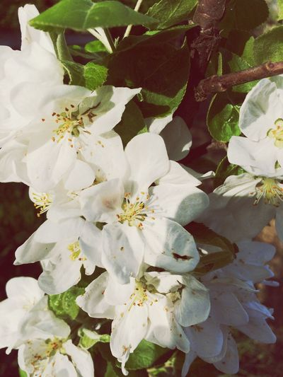 Peach tree flowers Springtime Spring Garden Garden Photography Green Nature Tree Peachtree Peach Blossom Peach Flowers