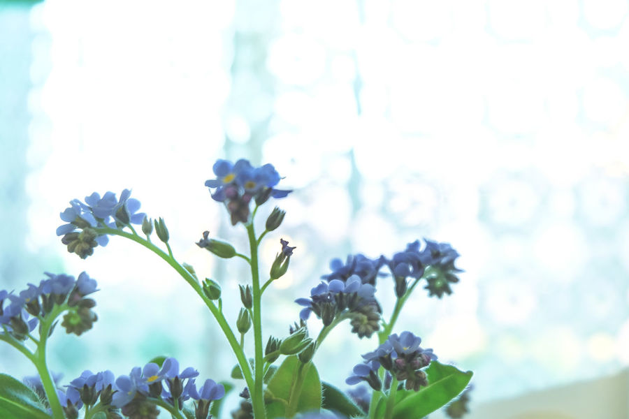 Beauty In Nature Blooming Blossom Blue Close-up Day Flower Flower Head Focus On Foreground Forget Me Not Fragility Freshness Growth In Bloom Leaf Low Angle View Nature Petal Plant Sky Stem