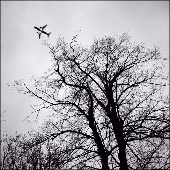 Bare Tree Coming In Creepy Trees Heathrow Here We Come Low Angle View Monochrome Night Flight Night Sky Tree Wheels Up