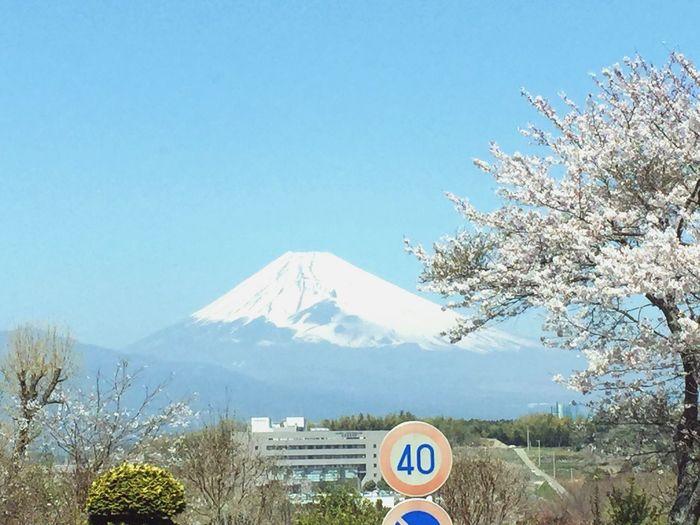 玉沢地区は桜がたくさん Mtfuji Flower Scenery