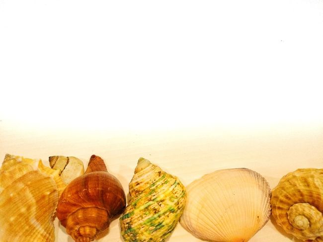 Shells And Rocks Seaside Rocks And Shells Shells🐚 Beach Ocean Sea Tropical Holiday Pattern Texture Shell Shell Sea Shell Group Collection Set Beach Sand White Background Close-up