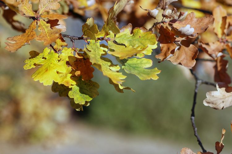 Close-up of dried leaves on plant during autumn