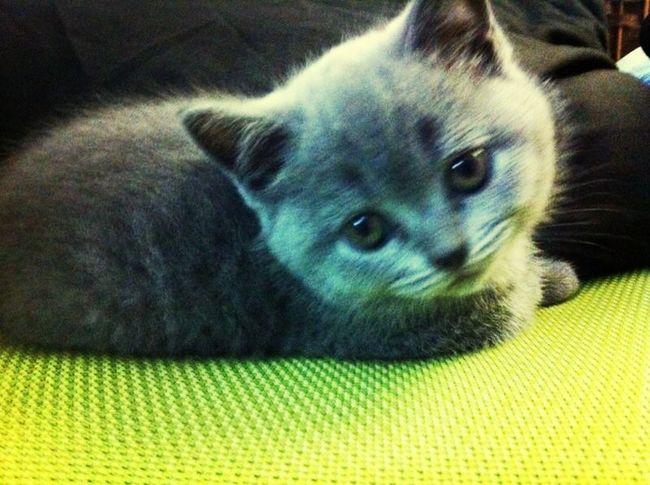 My Cute Kitty