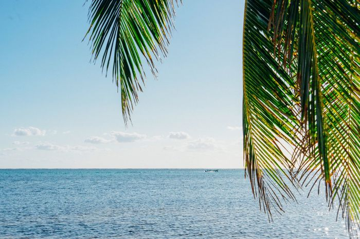 Palm Tree Sea Horizon Over Water Sky Nature Scenics Beauty In Nature Tranquility No People Growth Copy Space Day Tranquil Scene Tree Beach Clear Sky Water Green Color Palm Frond Leaf Caribbean Be. Ready.