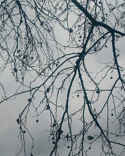 Tree Branch Sky Outdoors Beauty In Nature Spooky Spooky Trees Dark Skies First Eyeem Photo