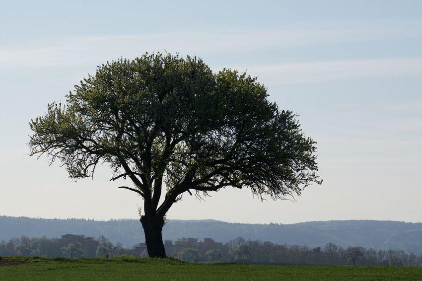 Nature_collection Tree EyeEm Nature Lover Naturelovers Eye Em Nature Lover Landscape Landscape_Collection EyeEm Best Shots Trees TreePorn