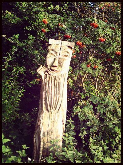 So I walked through the forest just to see your face. Carved in wood and smiling at me. I never thought to meet you this way. Carved in wood, smiling at me.Nature_collection Tree Face EyeEm Nature Lover