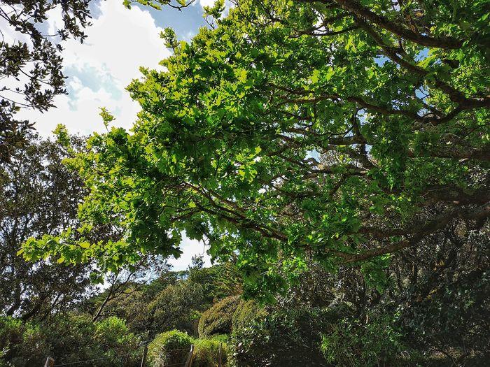 Bois Nature