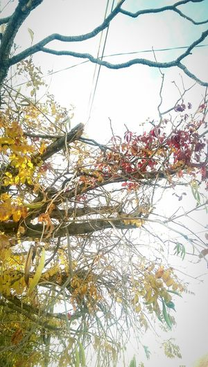 Tree Nature Fall Leaves Leaves🌿 Leaves 🍁 Branches Low Angle View Longing Nostalgia Melancolia Melancholia Melancholy Nostalgic  Melancholic Beauty Sky Day Afternoon Light First Eyeem Photo