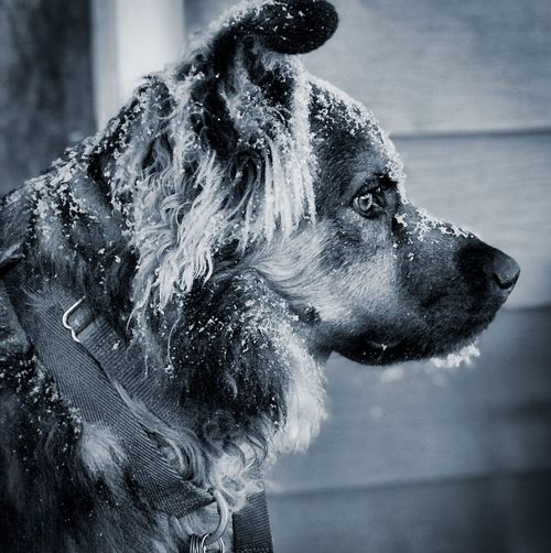 Close-up of wet dog