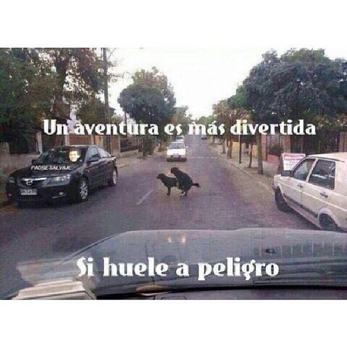 Frasesinstagram Frasesespa ñol Frases Perro calle frasesdecanciones peligro