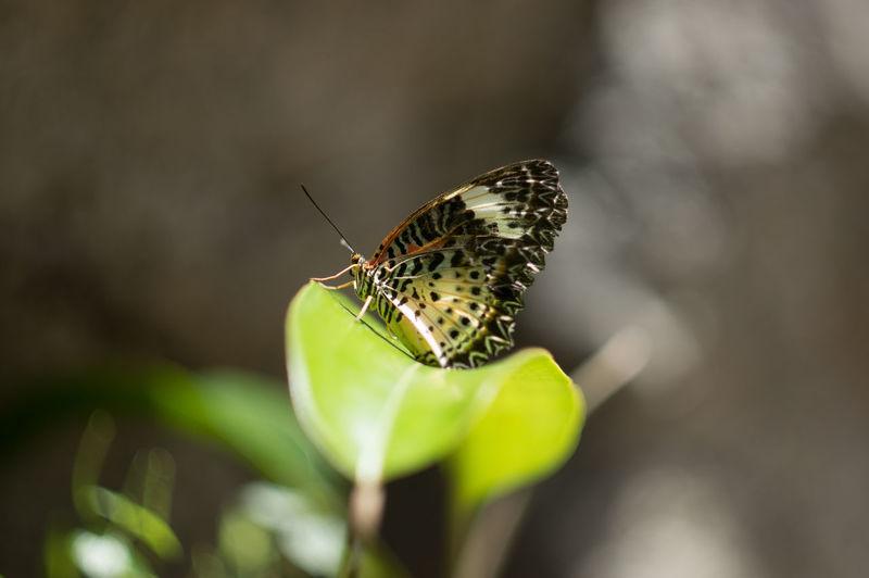 Macro shot of butterfly on leaf