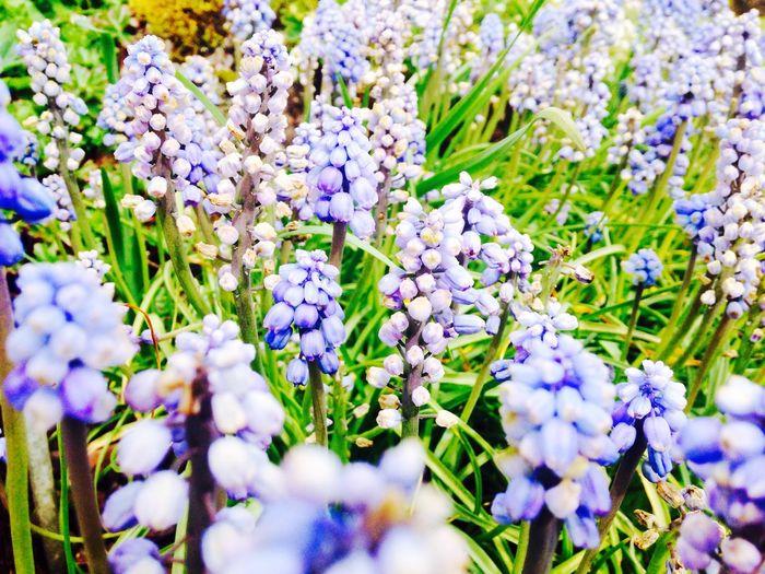 Flowers Taking Photos Enjoying Life Dailyphoto Royal Botanic Gardens
