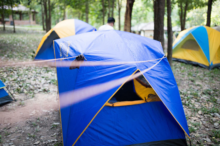 Camping tents in a forest
