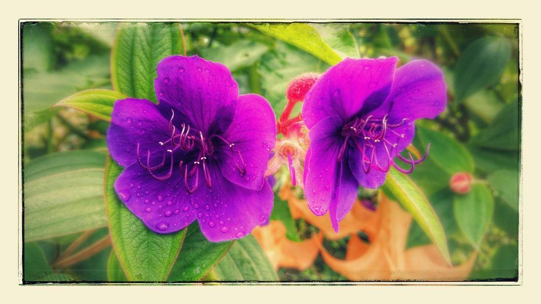 Enjoying The Sights Nature On A Hike Fleurs Flowers