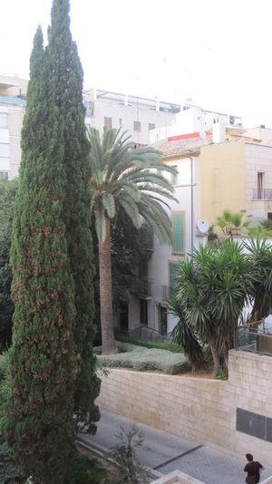 Palma De Mallorca Palmen City Summer