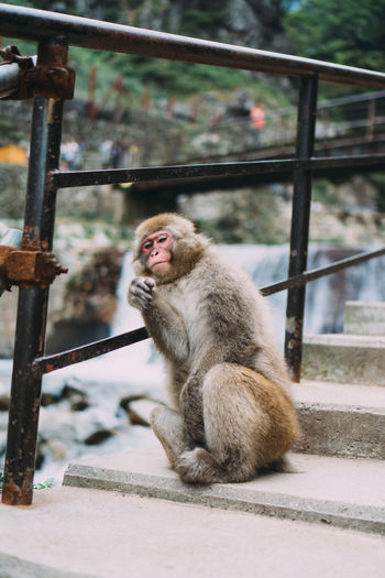 Monkey sitting on railing