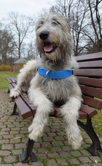 Benches_Of_The_World_Unite Animal Themes Outdoors Cearnaigh March 2017 Winter 2017 Bokeh Dog Of The Day Dogwalk Dogs Of EyeEm Dogslife Irish Wolfhound Dog Domestic Animals Close-up One Animal Herrenkrugpark