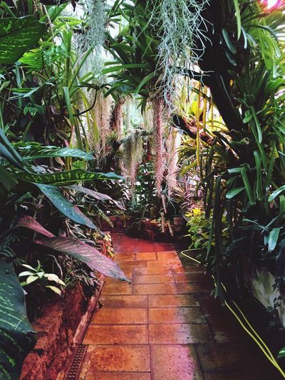 Humid Abundance Botany Botanical Garden Exotic Tropical Plant The Way Forward Tree Growth Direction No People Nature Footpath Beauty In Nature Green Color