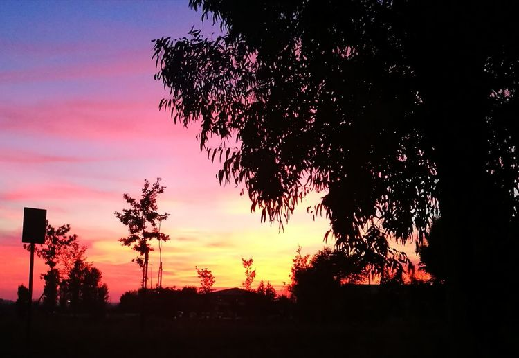 Romantic Romantic Sky Tree Silhouette Sky Sunset Plant Nature No People Tranquility Beauty In Nature Outdoors Orange Color Landscape Scenics - Nature