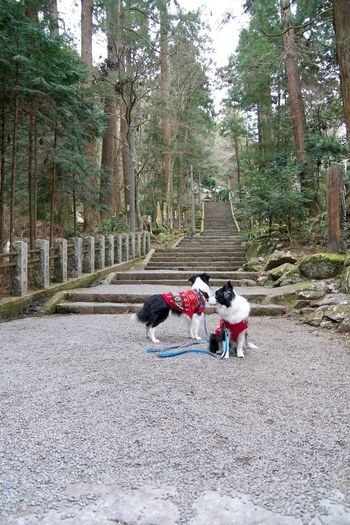Nikon D7100 Stairs Temple Shrines And Temples EyeEmJapan Dog Border Collie I Love My Dog My Border Collie Japan Nikon EyeEm Japan Snap