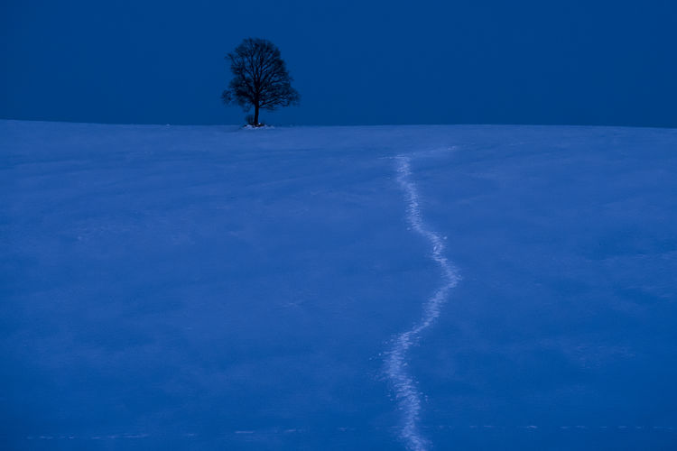 Traces in the snow. Blue Wave Beauty In Nature Blue Cold Temperature Day Landscape Nature No People Outdoors Sky Snow Snow Covered Traces Tree Winter