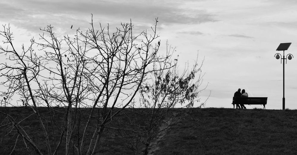 Silhouette bare tree on field against sky