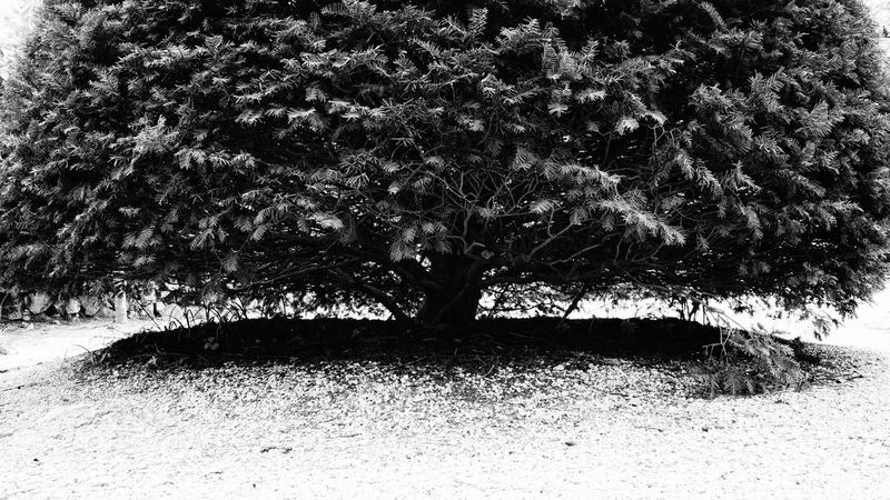 Tree Sonynex7