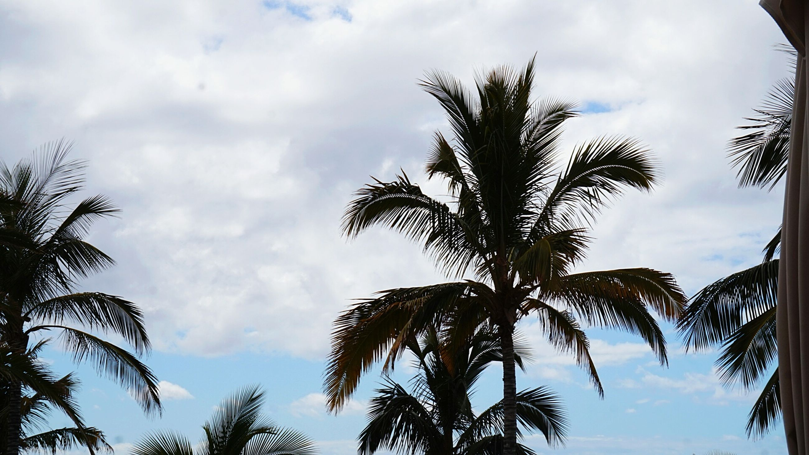 sky, low angle view, palm tree, tree, nature, cloud - sky, growth, no people, beauty in nature, tranquility, outdoors, day, scenics, branch, close-up