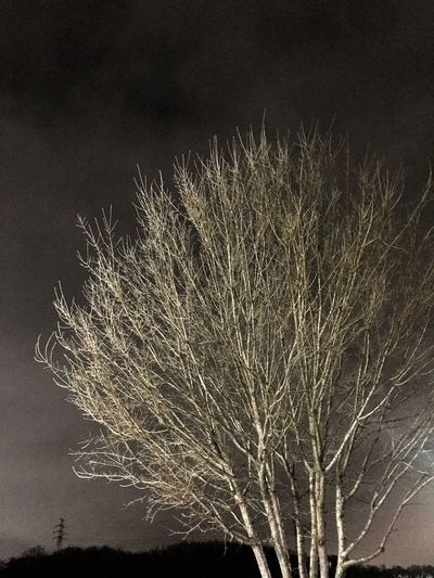 White tree Leechangwon Low Angle View No People Night Motion Sky Nature Tree Beauty In Nature EyeEmNewHere