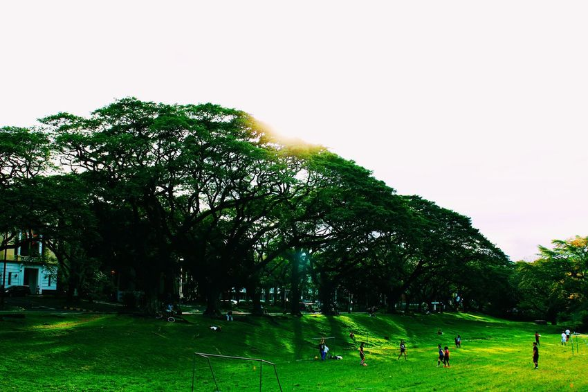 Blanc et Vert Outdoor Photography Outdoors Nature Greenery University Up Diliman Campus