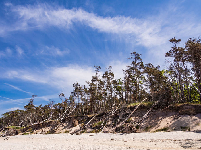 Baltic Sea coast Baltic Sea Holiday Relaxing Trees Weststrand Beach Blue Sky Cloud - Sky Coast Day Fischland-darß-zingst Journey Landscape Nature No People Outdoors Sand Shore Sky Tourism Travel Destinations Vacation
