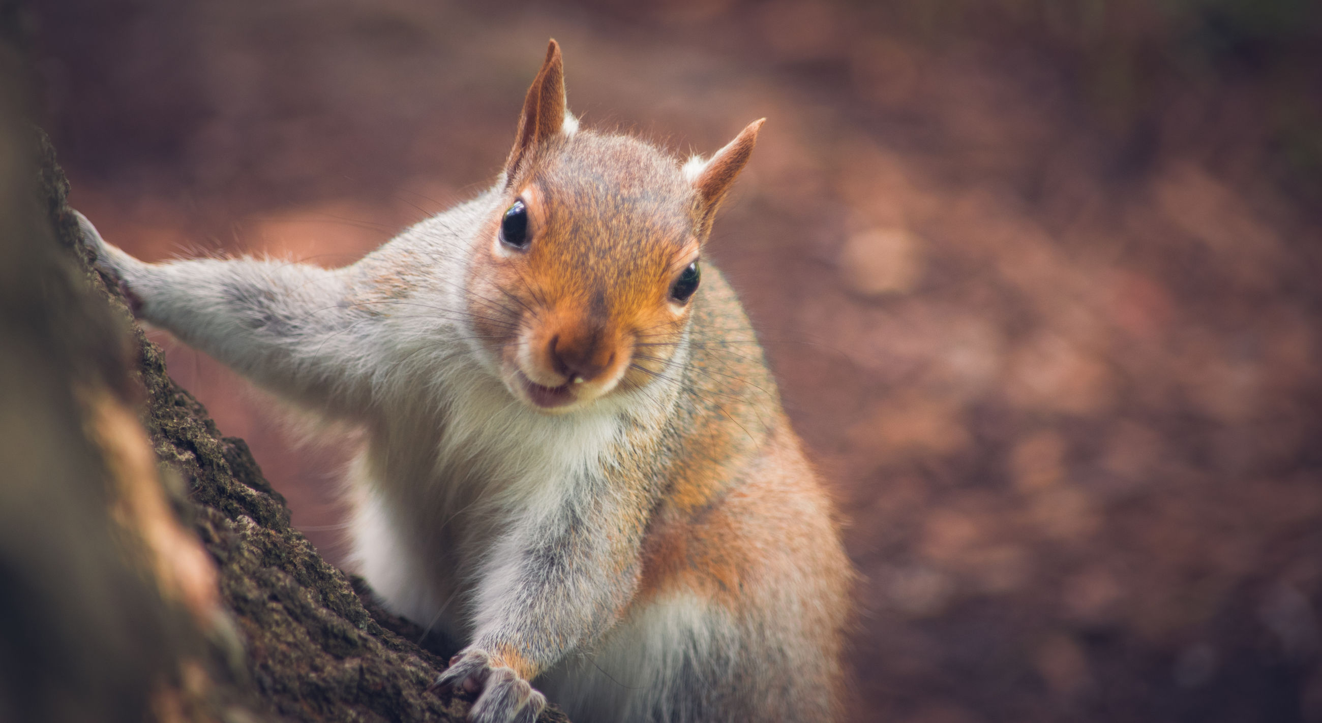 one animal, animal themes, mammal, squirrel, no people, animals in the wild, animal wildlife, domestic animals, nature, pets, day, outdoors, close-up, portrait