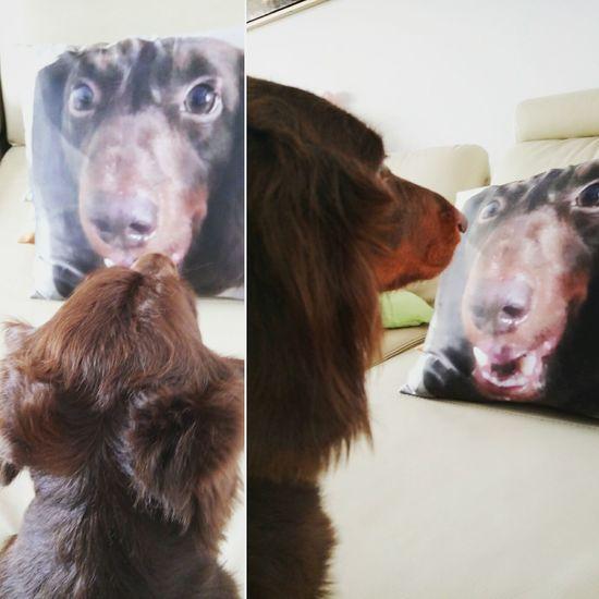 Oh, I'm so handsome. Doglover Dog Doggie Dog Lover Cute Pets Dogs Of EyeEm Dog Love Pets Dog❤ Taking Photos I Love My Dog Dachshund Dachshundlove Sausagedog Animal Themes Animal Head