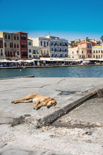 Dog Sleeping On Pier Over River In City During Sunny Day