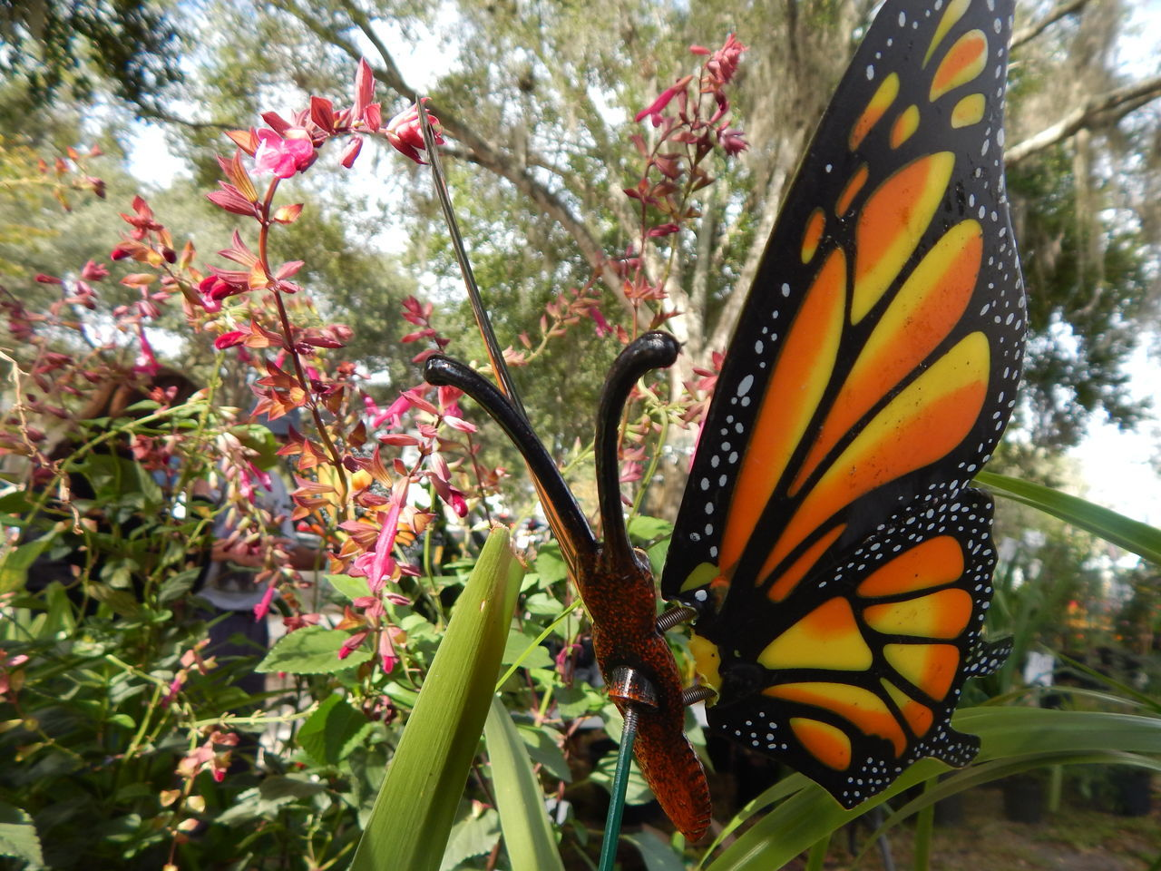 butterfly - insect, animal themes, nature, growth, insect, one animal, animals in the wild, beauty in nature, no people, plant, butterfly, day, flower, fragility, outdoors, animal wildlife, close-up, freshness, animal markings, tree, blooming, flower head, pollination