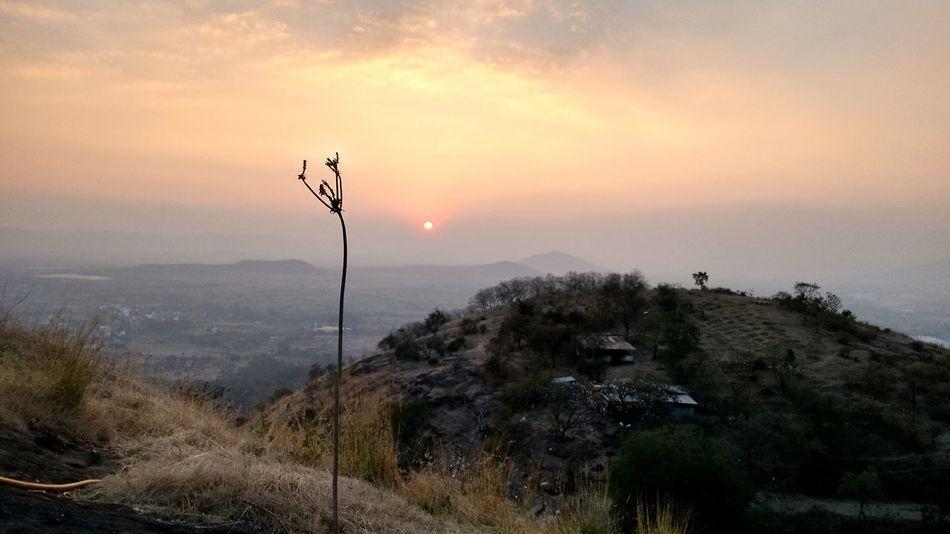 landscape Drygrass Tree Sunset Sky Landscape A New Beginning