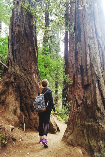 Giant Redwood trees Muir Woods Redwoods Forrest Tree Full Length Tree Trunk Women Hiker Mountain Climbing Hiking Pathway