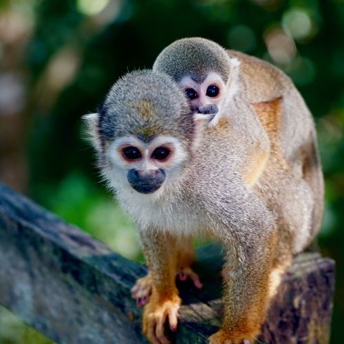 Close-up portrait of monkey on tree