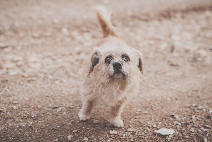 Stray Dog in the Dirt Road . Small Dog Big Attitude Nikon Centered Composition Street Photography Intergrated
