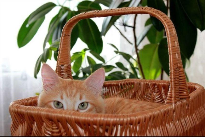 Cat рыжий кот Áfonya Афоня рыжий кот Afonsiko Cats Cat♡