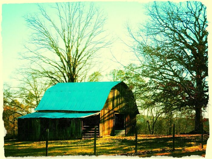 Barn and trees. Trees Barn Nature