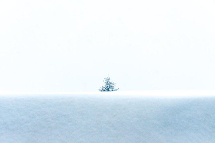 Snow Cold Temperature Nature Winter Extreme Weather Rural Scene Copy Space Beauty In Nature Snowing Frozen Covering White Color Tranquil Scene Outdoors Tranquility No People Minimalism Tree Coniferous Tree White Background Backgrounds Sparse