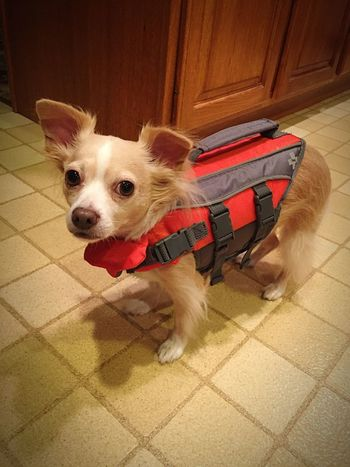 Cute Pets Kayaking Adorable Love Bestfriend Milo is ready to go kayaking adventures with momma💕