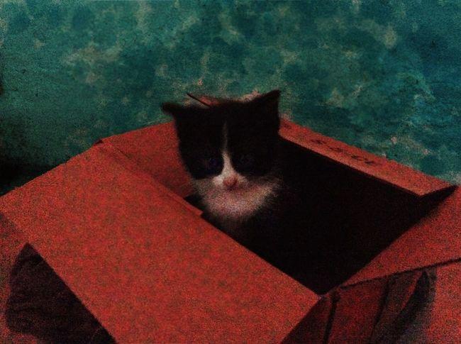 Cat Rescuecat Kitten Cute Rescued Kitten