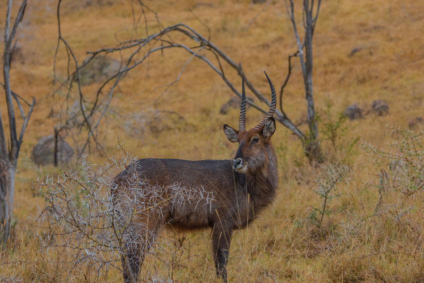 Africa African Safari Kenya Lake Nakuru Nature Nikon D810 Wildlife & Nature Ziseetheworld