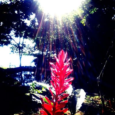 Day Sunlight Flower Biology Red Flower Red Sun Colombia