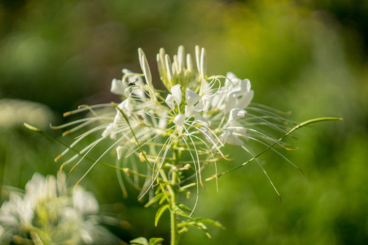 Belarus Minsk Beauty In Nature Close-up Dandelion Seed Day Flower Flower Head Flowering Plant Focus On Foreground Fragility Freshness Green Color Growth Nature No People Outdoors Petal Plant Plant Stem Selective Focus Vulnerability  White Color